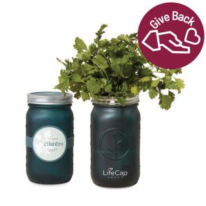 Modern Sprout Indoor Herb Garden Kit - Emerald
