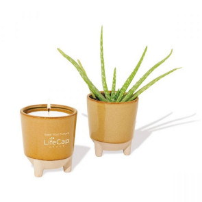 Modern Sprout Glow & Grow Live Well Gift Set - Amber: Desert Oasis w/ Aloe Seeds