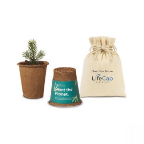 Modern Sprout One For One Tree Kits - Spruce