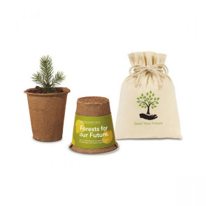Modern Sprout One For One Tree Kits - Sycamore